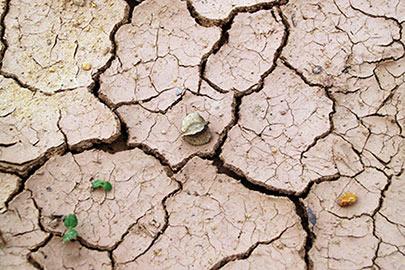 Día mundial contra la desertificación y la sequía 2020